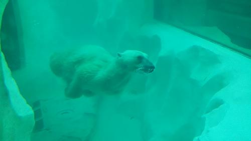 子供と上野動物園に行ってきました。